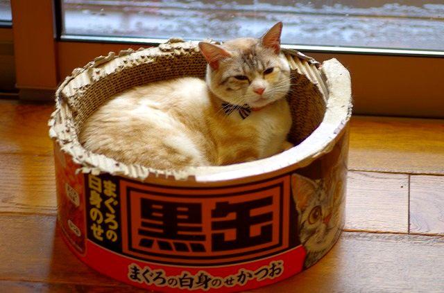 Cats Cafe nuko-mahi 1
