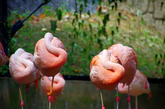 福岡市動植物園 LAST