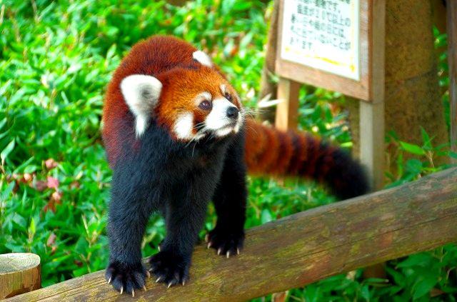 福岡市動植物園 3