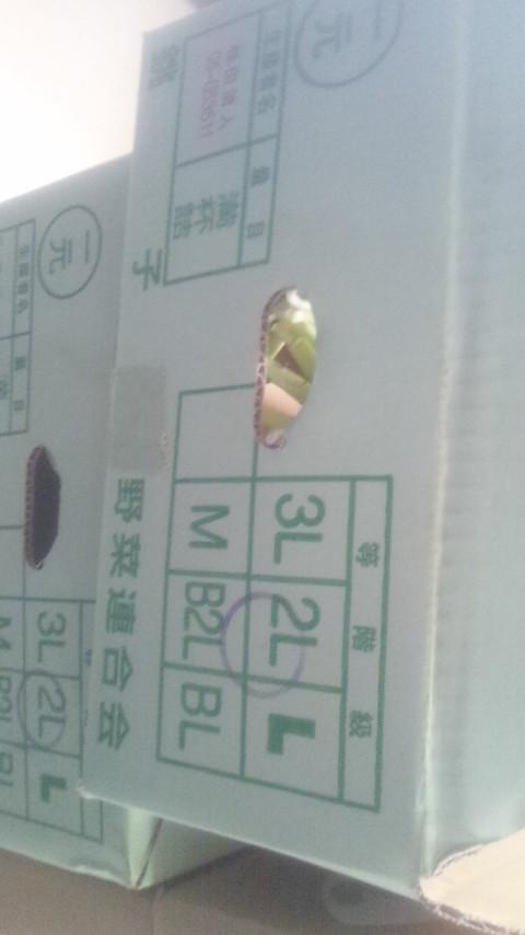 daikon20145.jpg