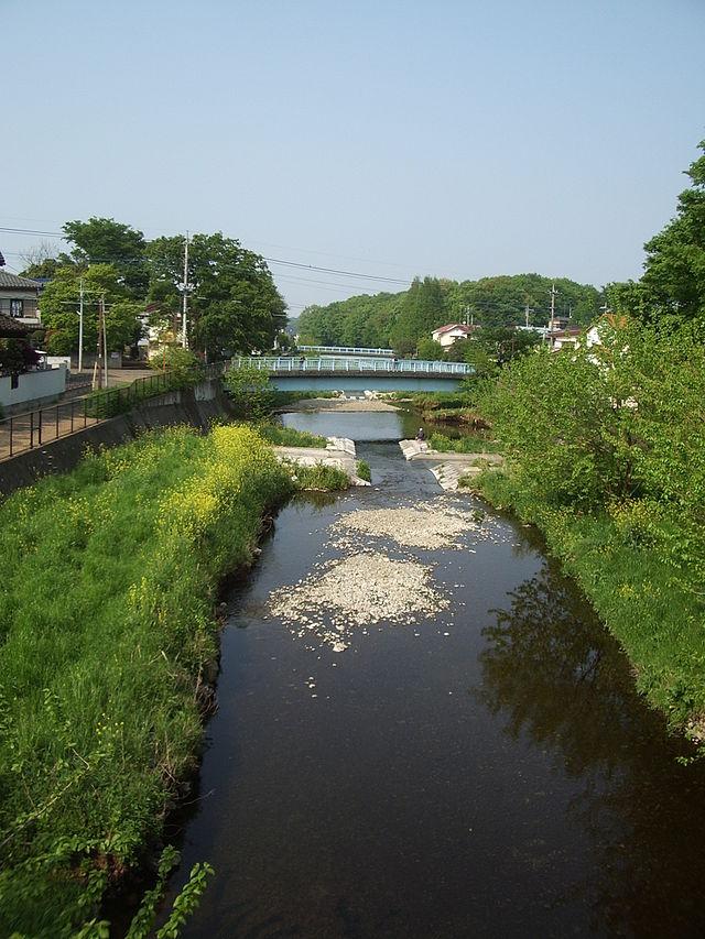 【原因不明】 埼玉県黒目川で鮎(アユ)の死骸600匹が見つかる…水質に異常なし