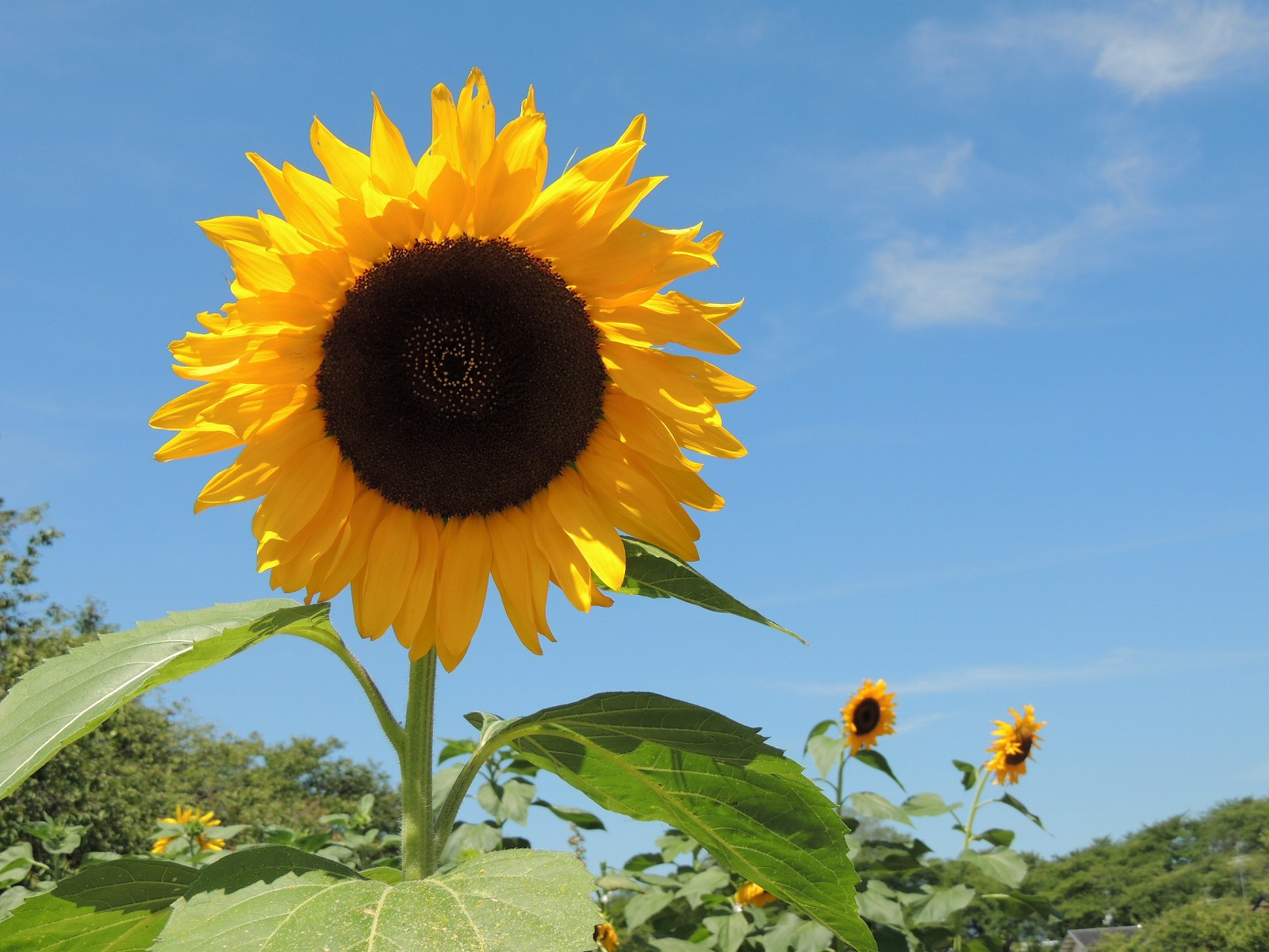 冷夏とは何だったのか…連日の猛暑、エルニーニョは? 発生は秋以降