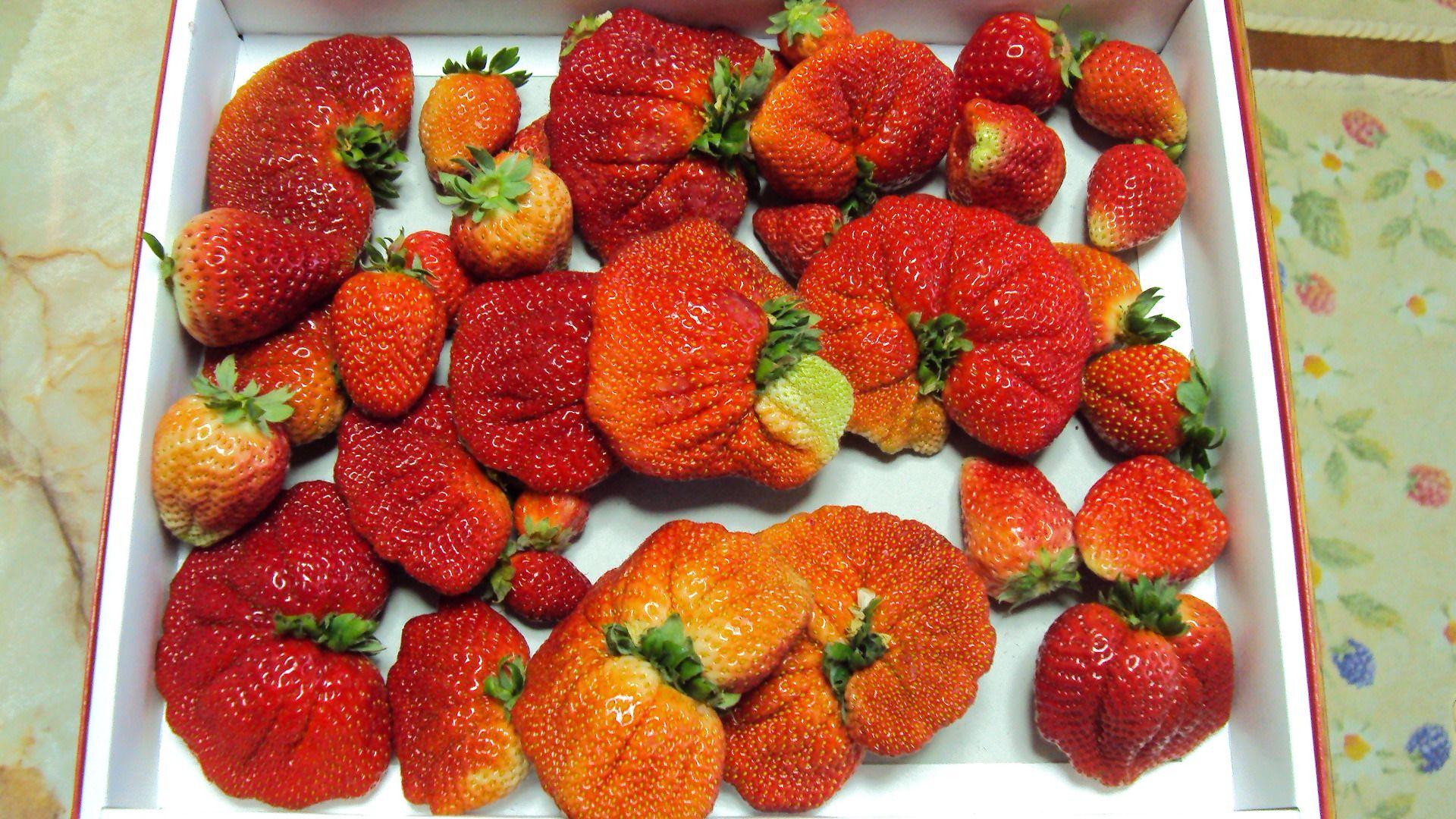 近所の人からイチゴもらったけどワロタwwwwwww → 規格外イチゴは「放射能の影響」? まとめ