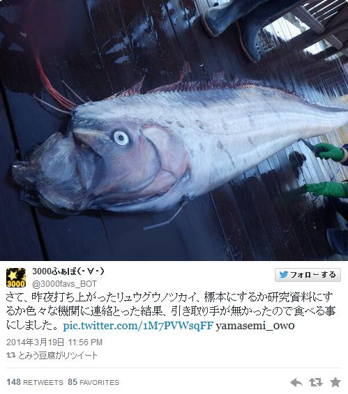 またも北九州市若松区でリュウグウノツカイ見つかる! 石川県能登半島沖では深海に生息する「キアンコウ」2匹を捕獲!