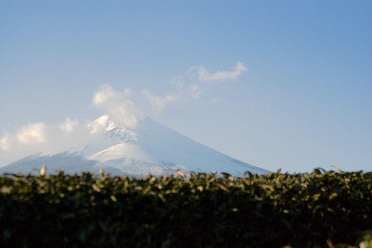 shizuoka3456.jpg