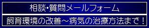 【相談・質問メールフォーム】へ