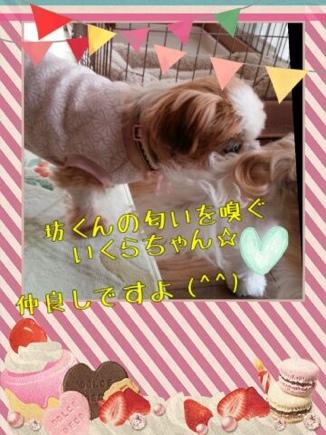 fc2blog_20140319215148331.jpg