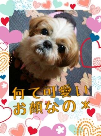 fc2blog_201403242320046dc.jpg