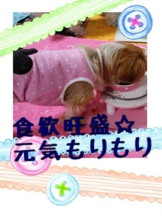 fc2blog_20140325204710f00.jpg