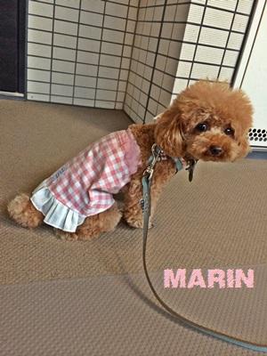 marin3.jpeg