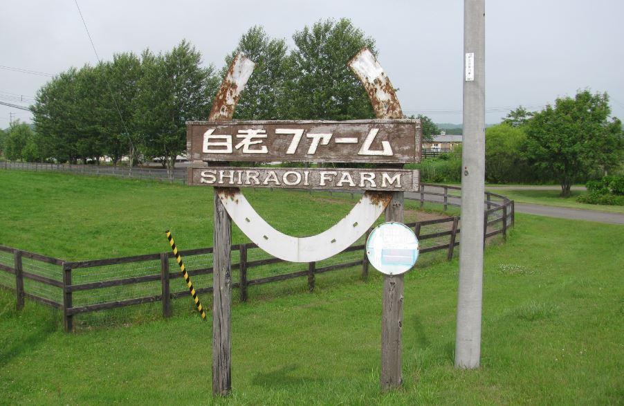 20140707_shiraoi05.jpg