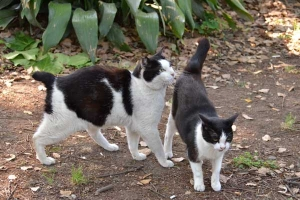 Cats Greeting