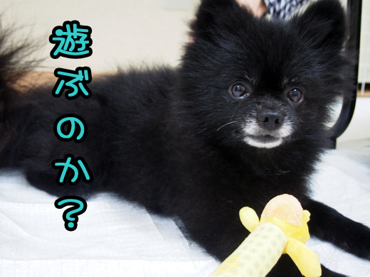 hissatumaeasioki_20140823132240b19.jpg