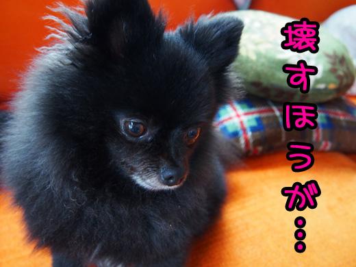 kowasuhougasuki.jpg