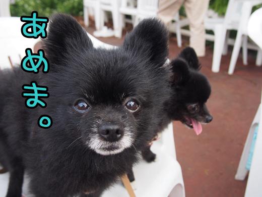 uchinoinugatakararenaiyou.jpg