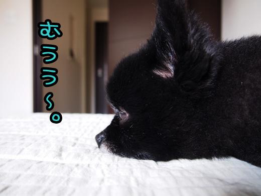 yonakamademateba.jpg