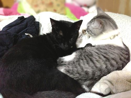 cats103.jpg