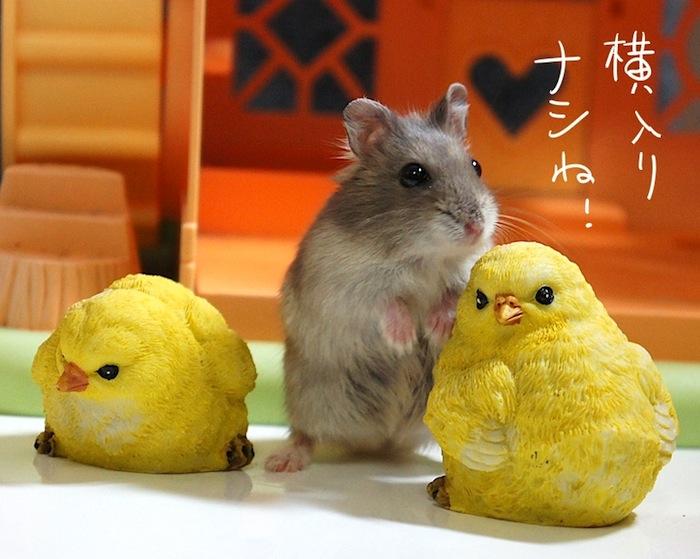 fc2yokohairi.jpg