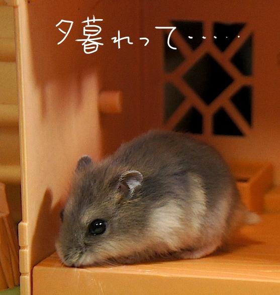 hamster201461.jpg