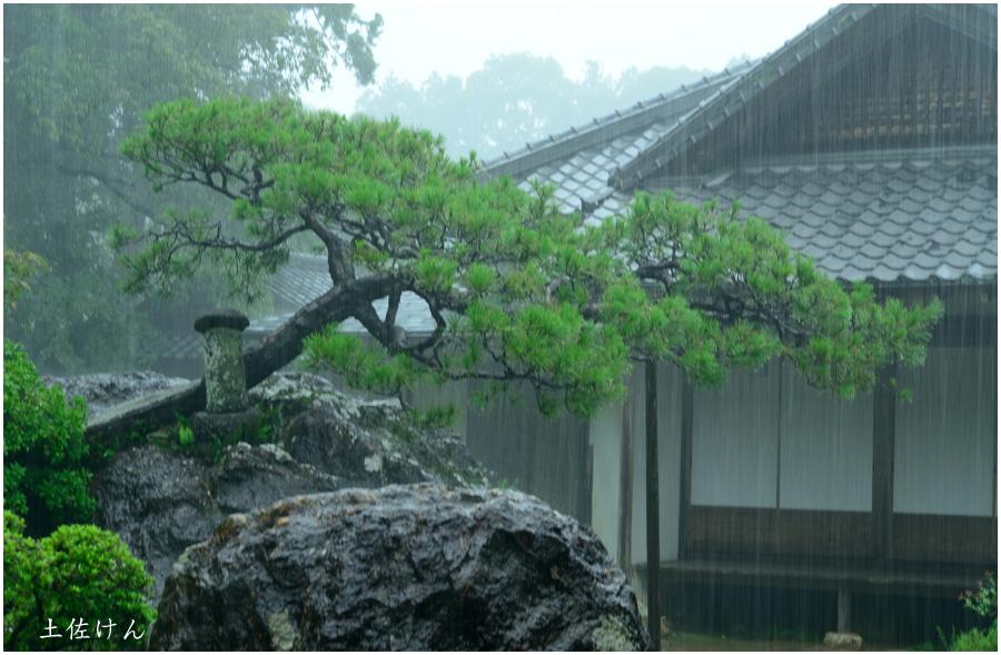 高知・竹林寺3