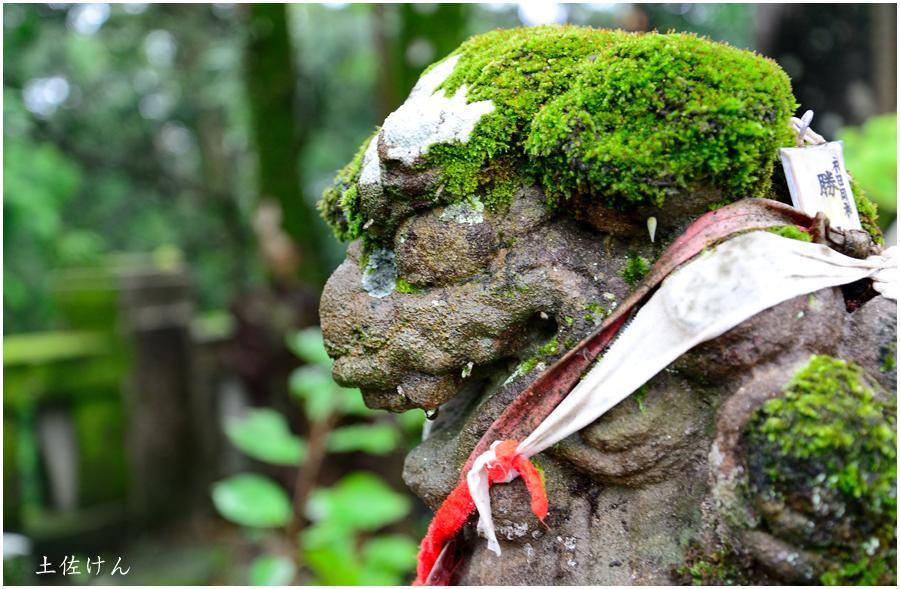 高知への帰省・竹林寺5