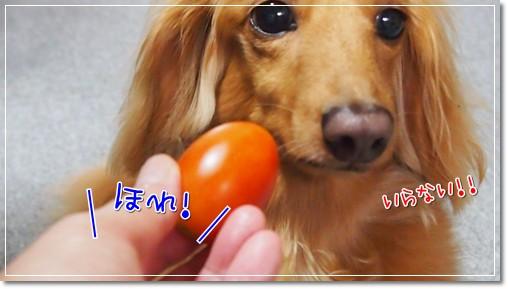 トマトガブリ1