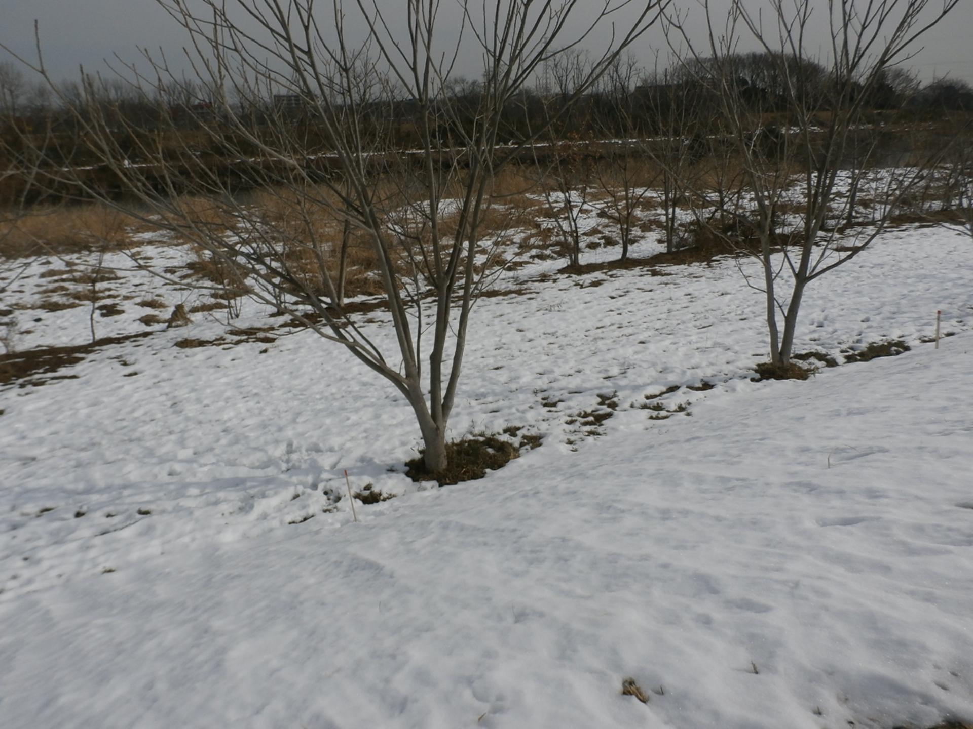 P2200684.jpg