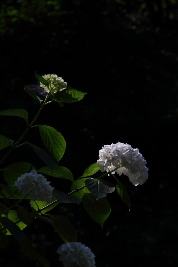 fc2_2014-06-16_20-05-17-719.jpg